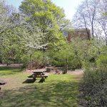 Der Schulgarten. Eine grüne Oase